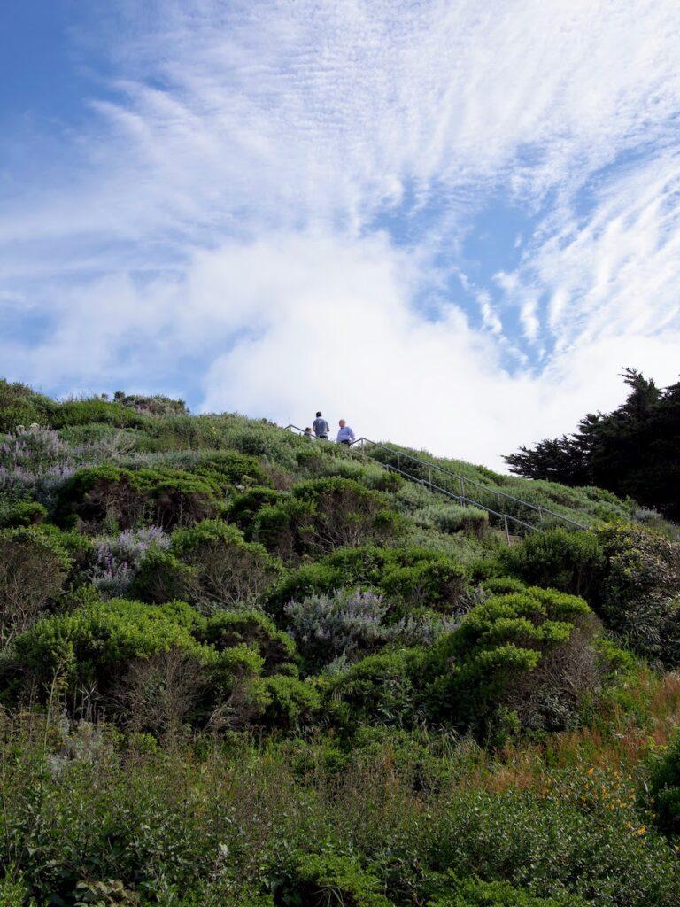 Lands End - San Francisco, CA - photo by Steve Ciabattoni